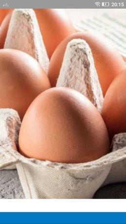 Sprzedam jaja kurze.