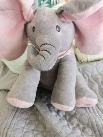 Słonik peek-a-boo