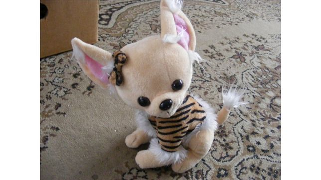 pies maskotka Chihuahua stan idealny