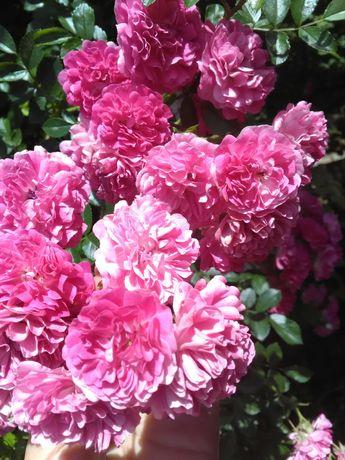 Рослини.Квіти