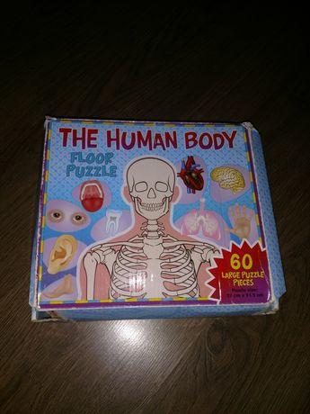 игра.Пазлы обучающие анатомическиеазлы