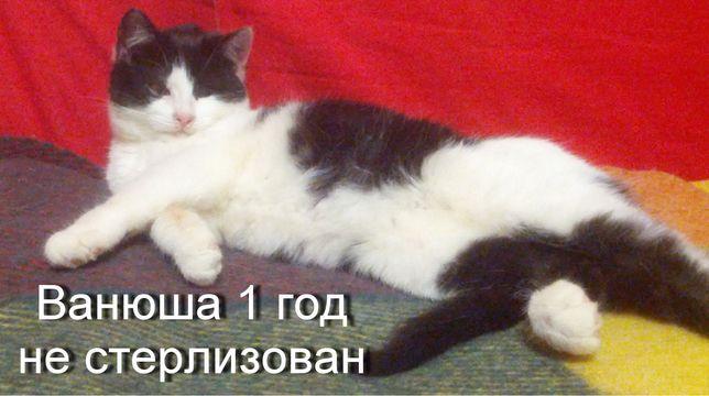 Кот Ванюша только в добрые руки