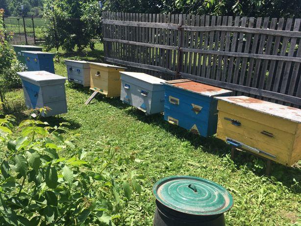 Бджоли, вулики