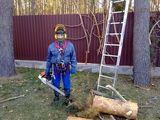 Спилить дерево-валка, спил, удаление, обрезка, кронирование деревьев