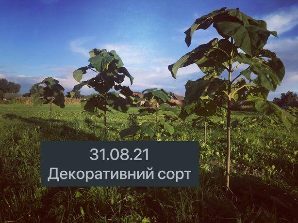 Павловния, Без.Доставка, Корні Павловнії, Опт , Ціна Топ, Якісь