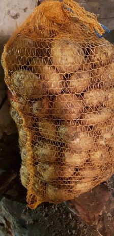 Ziemniaki Pyry  pakowane po 15kg