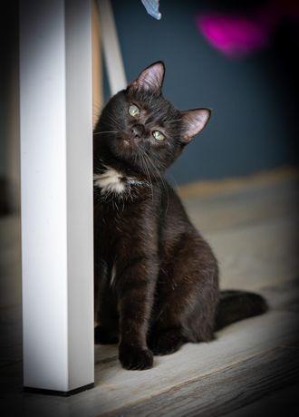 Наоми-1.5 года харизматичная котодевочка