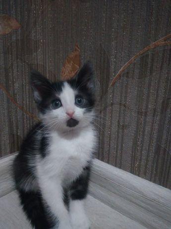 Отдам милого ласкового  двухмасного полосатого котенка в хорошие руки.