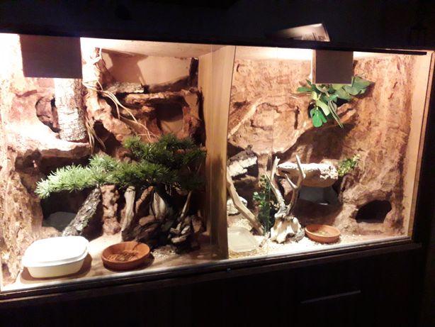 Terrarium plus dwa gekony lamparcie