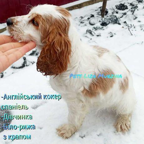 Мега зимові знижки!!! Крупний торг на будь яку собаку!