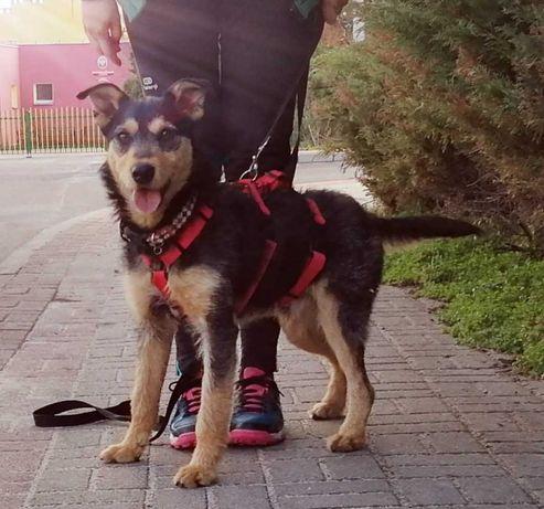 Mix terierek Pedro- lagodny, radosny psi dzieciak
