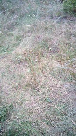 Земельный участок под застройку