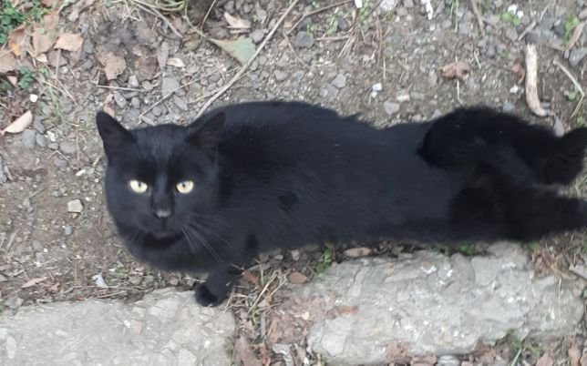 Черный котик!!! Могилев-Подольский Винница Нежный и замечательный