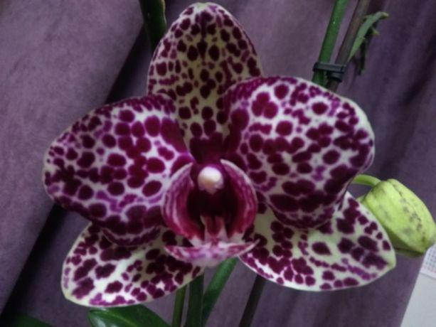 Продам орхидеи и другие комнатные растения