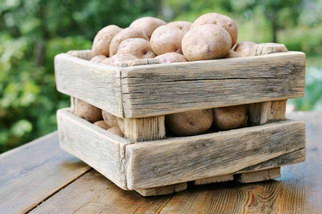 Картошка, бульба, картопля