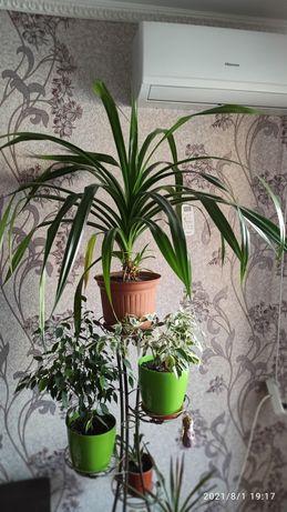 Обмен пандануса на орхидейки