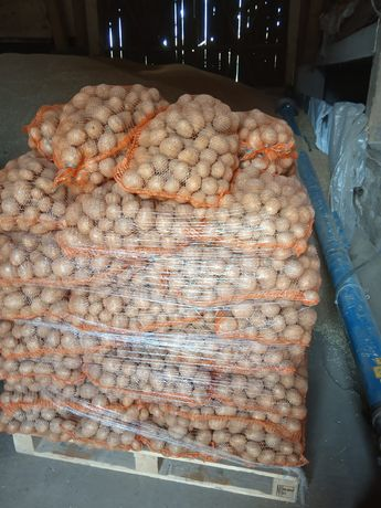 Ziemniaki o wielkości sadzeniaka oryginał w zeszłym roku. Transport.