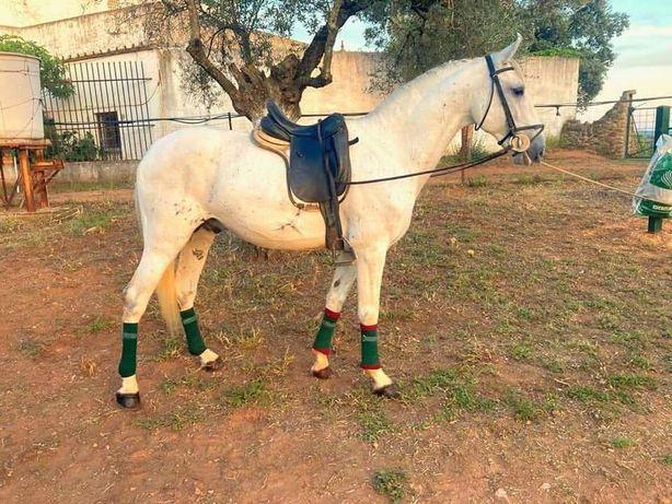 Vendo cavalo PSL