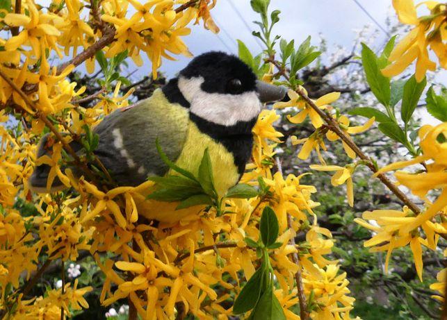 Ptak Wild Republic Maskotka Pluszak Śpiewający - Zabawka Edukacyjna
