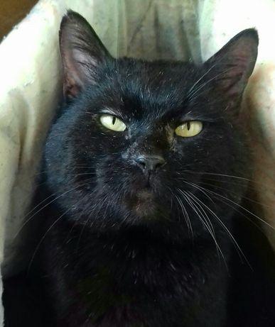 Ласковый кот, спасеныш, кастрирован