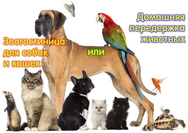 Передержка животных, зоогостинница