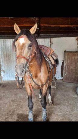 Cavalo cruzado ferro Rio Frio