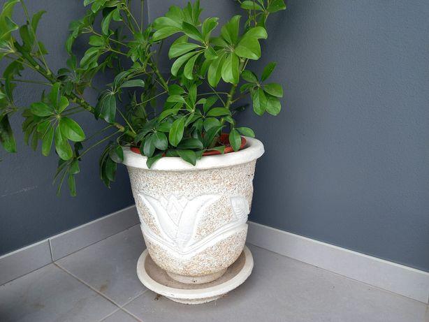 Vasos de pedra com prato