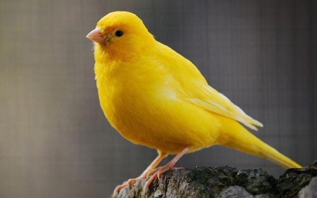 Утримання птахів