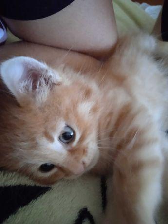 Отдам котенка в хорошие руки,отдам котенка