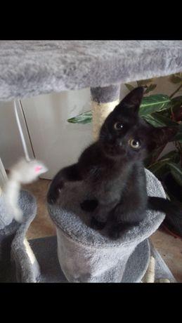 Oddam koty w dobre ręce