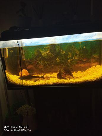 Akwarium zestaw 200 litrów