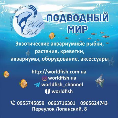 Аквариумные рыбки, аквариумы с крышкой и светом, растения, креветки