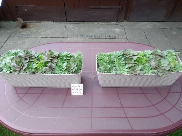 Sprzedam rośliny ogrodowe