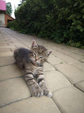 Oddam małe kotki, koty.