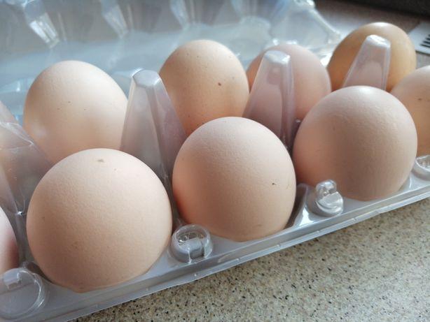 Jajka wiejskie 70gr