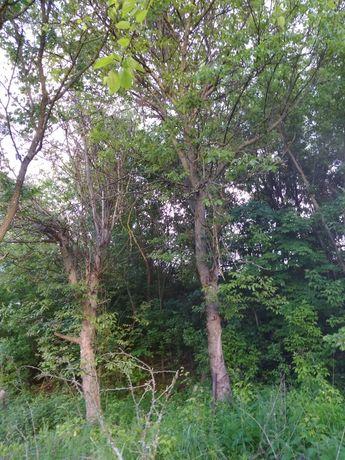 Продам древесину - деревья под спил : орех грецкий, черешня, каштан