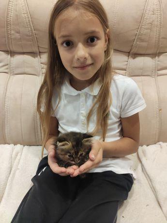 Котёнок ищет доброе сердце