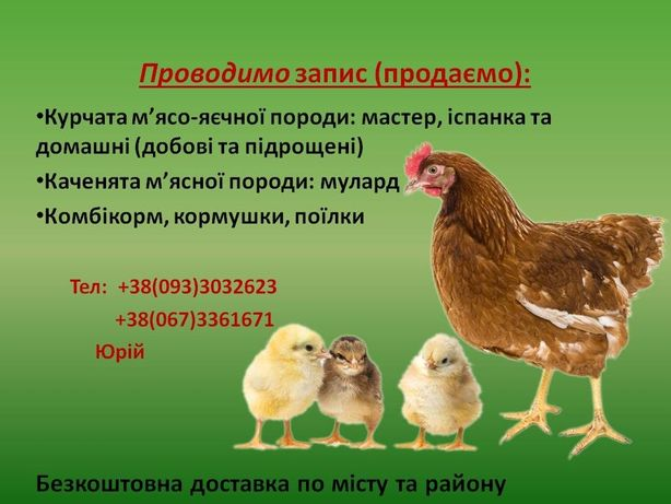 Продаж курчат(мастер, іспанка), каченята мулард