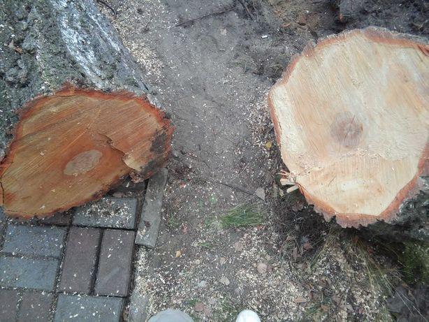 Drzewo - brzoza, drewno tanio Andrespol