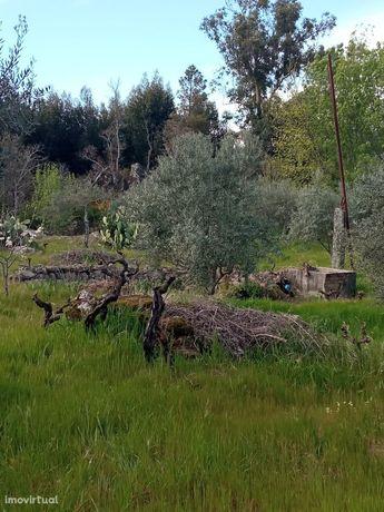 Terreno Rústico  Venda em Aranhas,Penamacor