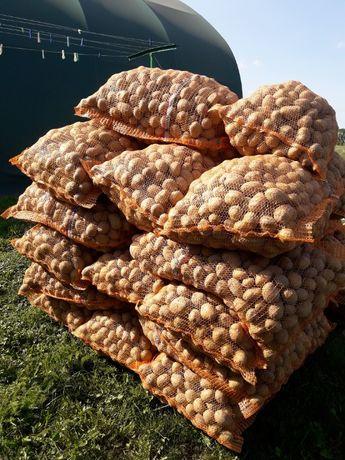 ziemniaki wielkości sadzeniaka Denar, Bellarosa, Vineta