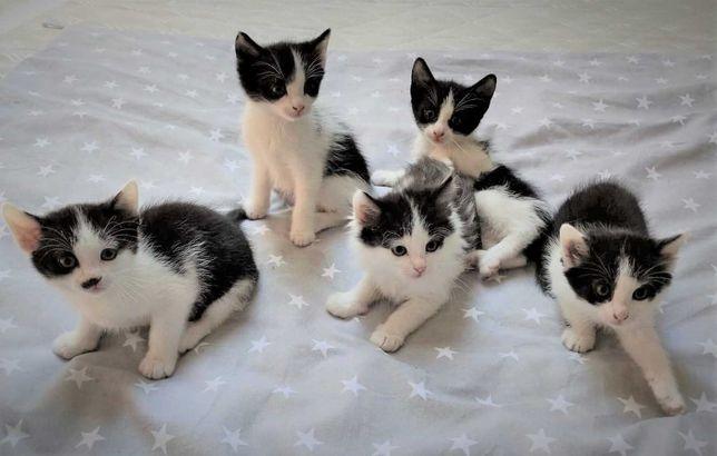 Kotki od łagodnej Kici przyzwyczajone do ludzi