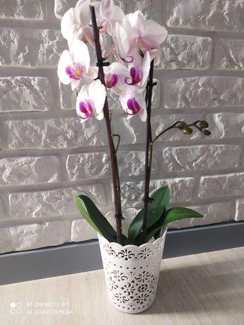 Osłonka do kwiatów doniczka ażurowa biała 3 szt