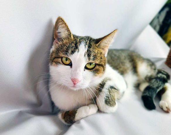 Грациозная кошечка Масяня, 1 год, ищет семью! кошка кот котенок