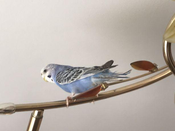 Яркий и красочный попугайчик