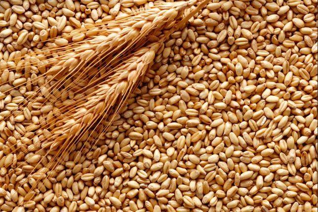 Продається пшениця, ячмінь
