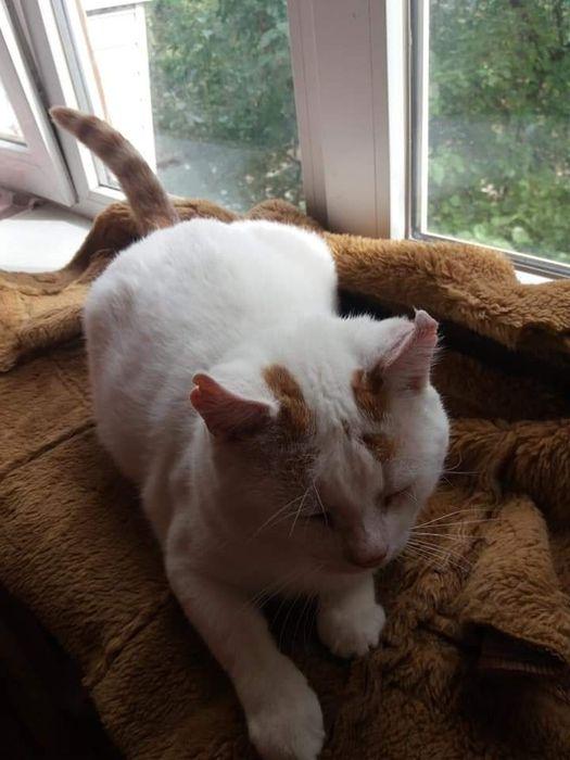 Паре котиков срочно нужен дом Запорожье - изображение 1