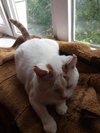 Паре котиков срочно нужен дом