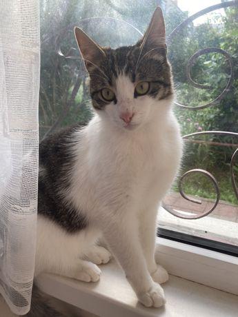 Кот котик Маркиз ждет своих любящих хозяев