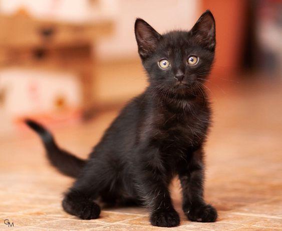 Очаровательный череный котенок в добрые руки